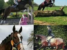 Stunning 17.2hh KWPN Mare. Serious Eventer Potential.