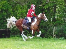 Amazing Fun All Rounder 13. 2 Skewbald Gelding For Sale
