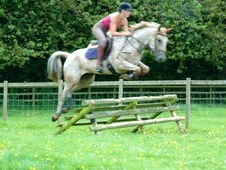 Quality Allrounder 15. 2hh
