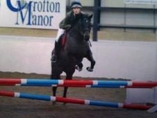 Competition Pony For Sale - Surrey