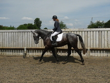 Smart Allrounder For Sale