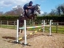 All Rounder horse - 5 yrs 15.0 hh Grey - Cheshire