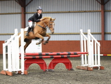14. 2hh Jumping Pony