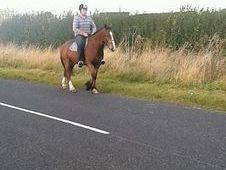 15. 1h Mare Family Horse £2000