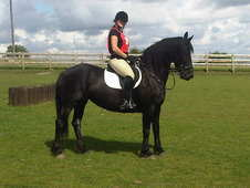 Friesian Mare For Sale