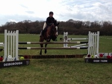 All Rounder horse - 6 yrs 14.3 hh Bay - Leicestershire