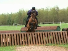 All Rounder horse - 16 yrs 14.0 hh Bay - Derbyshire