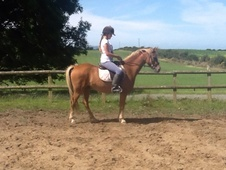 13. 2hh Perfect Pc Alrounder