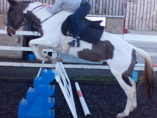 4 yrs coloured mare, cruising bloodlines