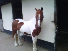Full time loan wanted for Rio, 14. 1hh cob cross mare-cheshire
