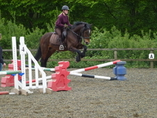 Jumping Pony for sale