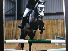 Pony Club Ponies horse - 7 yrs 1 mth 13.3 hh Iron Grey - West Mid...