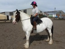 Kitty is a 7 Year old Skewbald Mare