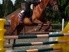 Honey, 13. 1h, Part Bred, 16 Years, Mare - Kent