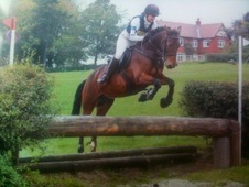 Fantastic Young Proven Pony Hunter And Eventer