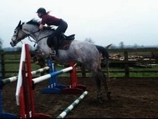 Beautiful 16. 1 potential event/ SJ 7yo ISH rosegrey mare for sale