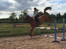 Show Jumping School Mistress **** Reduced****