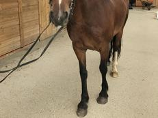Conny- quite and affectionate mare