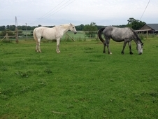 RID Broodmare for sale