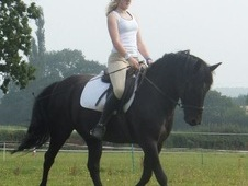 Incredible All-rounder Pony For Sale