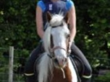 Cobs horse - 9 yrs 6 mths 13.0 hh Coloured - Hertfordshire