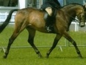 All Rounder horse - 12 yrs 15.2 hh Dun - Devon