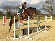 Very smart 16.2 bay mare!
