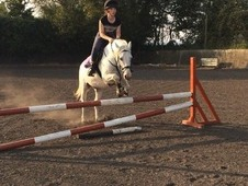 Fantastic Little Jumping Pony