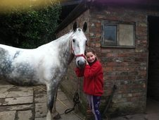15hh Gorgeous blue and white cob