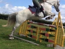 Great Potential 14. 3 Sports Pony