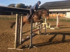 Super all rounder/ jumper
