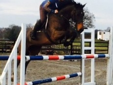 Talented /uncomplicated mare