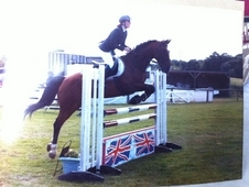 Wonderful 15. 2hh Warmblood Mare For Sale