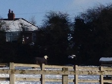 Stables & Grazing available in Swillington, LS26 - West Yorkshire