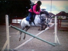 All Rounder horse - 9 yrs 2 mths 13.1 hh Dapple Grey - Middlesex