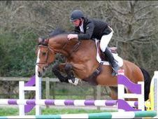Show Jumpers horse - 7 yrs 16. 3 hh - East Sussex