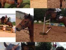 Brilliant 13. 2 Show Jumping Pony