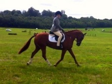 Serious Potential Top Class Event Pony
