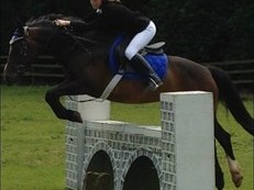 14.3HH BAY MARE FOR SALE