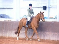Quality Middle Weight Gelding