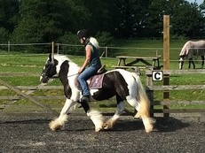 Safe Allround Pony club