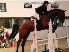 Quality Homebred 17hh Gelding