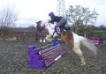 Riding Club Horses/Ponies horse - 7 yrs 1 mth 14.2 hh Coloured - Gloucestershire