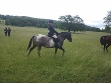 Pony Club Ponies horse - 7 yrs 1 mth 12.2 hh Appaloosa - Derbyshire