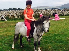 Lovely Grey Section A Childs Pony
