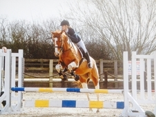 Flashy 16.1hh Coloured ISH Allrounder