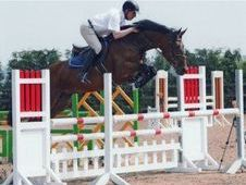 Sports horse - 6 yrs 16. 1 hh Bay - West Midlands