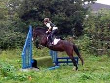 12. 2. Welsh B Mare, 10 Yrs. Totally Wasted. Open To Offers