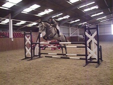 All Rounder horse - 7 yrs 16.1 hh Dapple Grey - Lincolnshire