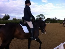 Potential young sports horses horse - 7 yrs 16.2 hh Dark Bay - Li...